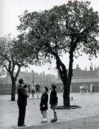 Morpeth School Mulberry Tree - Huguenots of Spitalfields