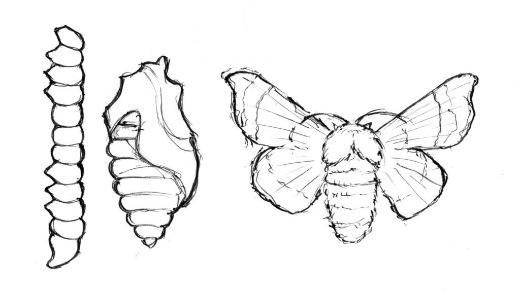 life cycle of a silk worm by Pete Garrett